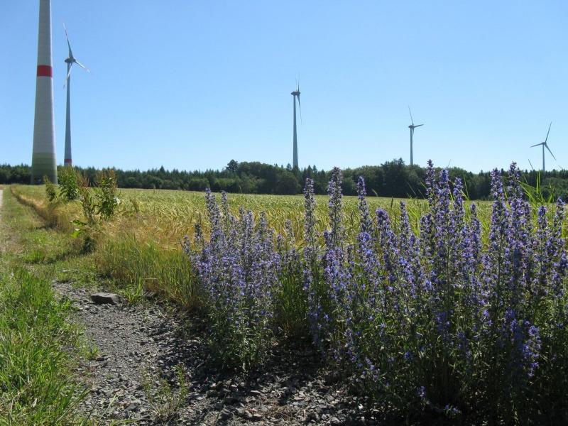 Energiewende im Hunsrück Windpark Kappel